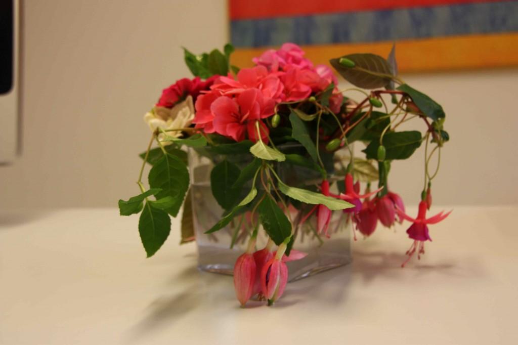 Fucsias, geranios y gardenias