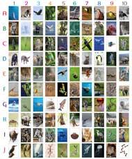 Concurso Orto-Fauna 2020